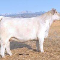 Mack Family Cattle
