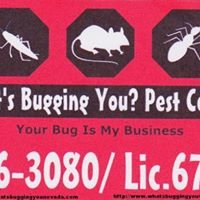 What's Bugging You? Pest Control, Las Vegas