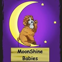 MoonShine Babies Cockapoos and Doodles
