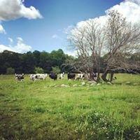 Simpson View Farm