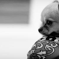 The Critterclicker Pet Portait Photographer