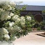 Avondale Elementary PTA