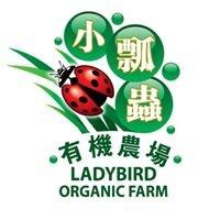 LadyBird Organic Farm