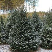 Hanauer's Tree Farms, LLC