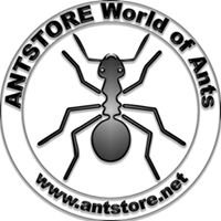 ANTSTORE World of Ants