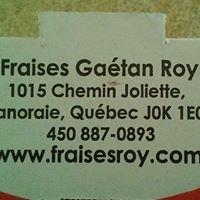 Fraises Gaétan Roy