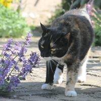 Guernsey Animal Healing