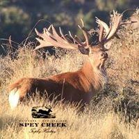 Spey Creek Trophy Hunting