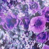 Anemone - kukkia ja kivaa Hangosta
