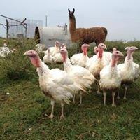 Greenwood Farms