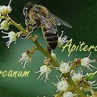 Apiterapia Arcanum