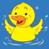 Duck & Dive Swimming