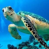 Aquadiving Tours - Viaggi e Crociere Sub