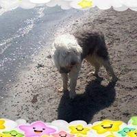 Star Dog walking