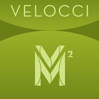 Velocci Model and Talent Management