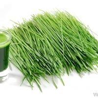 Wheatgrass4health