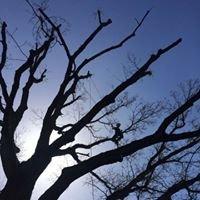 Browns Tree Management & Tree Care - Tree Surgeon Kings lynn, West Norfolk