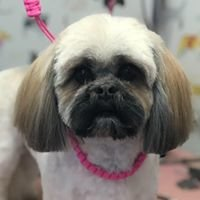 Doggy Styled Dog Grooming