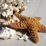 Siesta Sand