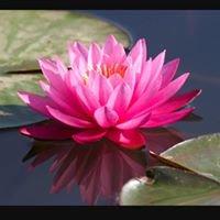 Lotus Blossom Spa in El Sobrante, Ca