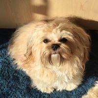 Pawlicious Pet Spa