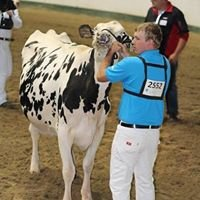 RyBerg Registered Holsteins