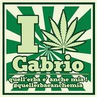 Csoa Gabrio