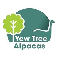 Yew Tree Alpacas