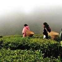 Subodh Brothers Darjeeling Tea