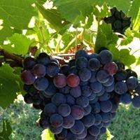 Redbud Farm and Vineyard