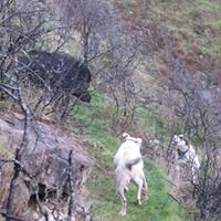 Wild Kiwi Hunting Adventures