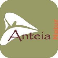 Anteia Natur