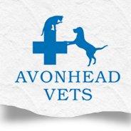 Avonhead Vets