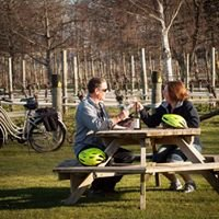 Wine Tours By Bike, Renwick Marlborough