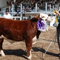 "Cabaña ""EL Pampa"" Polled Hereford-Angus Negro"