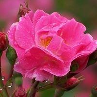 Rose Garden Clinic