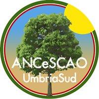 Ancescao Comprensorio Umbria Sud