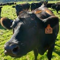Hastings Natural Beef