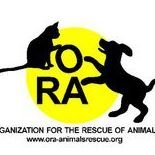 ORA-Organization for the Rescue of Animals