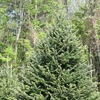 Twin Fir Christmas Tree Farm