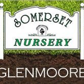 Somerset Nursery: Glenmoore