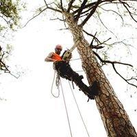 Tarzan Tree Service LLC