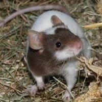 Primrose Mouse Rescue