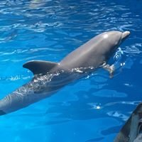 Dolphin Harbor Miami Seaquarium