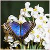 Gyvų tropinių drugelių paroda thumb