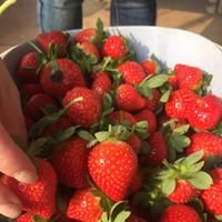 益光歡樂草莓園