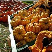 Pumpkin Patch Northeast UMC