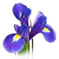 Ilusalong Iris