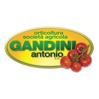 Orticoltura Gandini Antonio