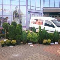 Producator Arbori si Arbusti Ornamentali